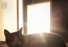 Métodos para evitar que tu gato arañe muebles