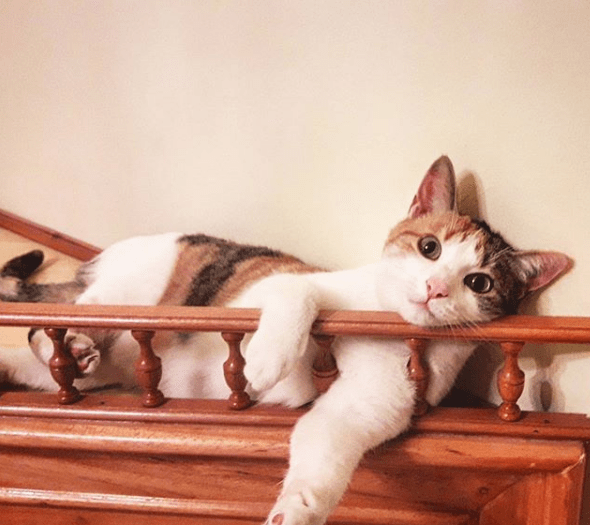 Pensión, gato perro