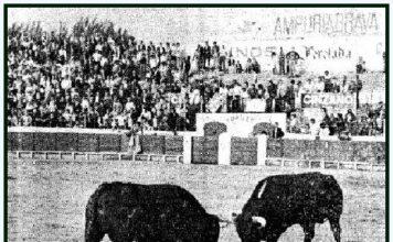 dos toros en la arena