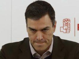 Pedro Sánchez miserable