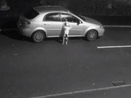 Hombre abandona perro antes de Navidad