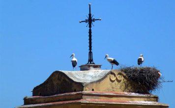 Las cigüeñas han llegado a lo alto de la torre andaluza