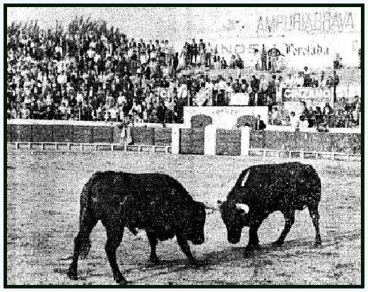 toros en la