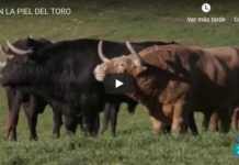 piel del toro