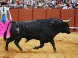 marcas del toro de lidia