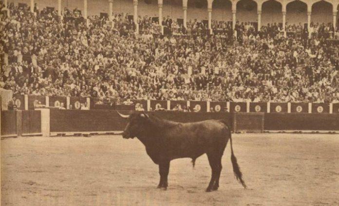 toro en la plaza