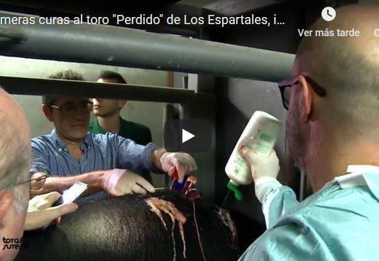 primeras curas a un toro indultado