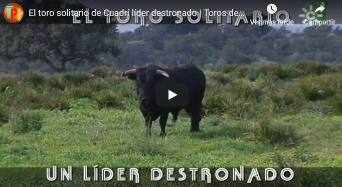 El toro solitario