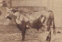 sanciones a ganaderías