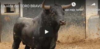 vida del toro bravo