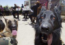 concierto para perros