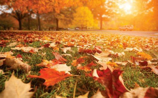 otoño de la democracia